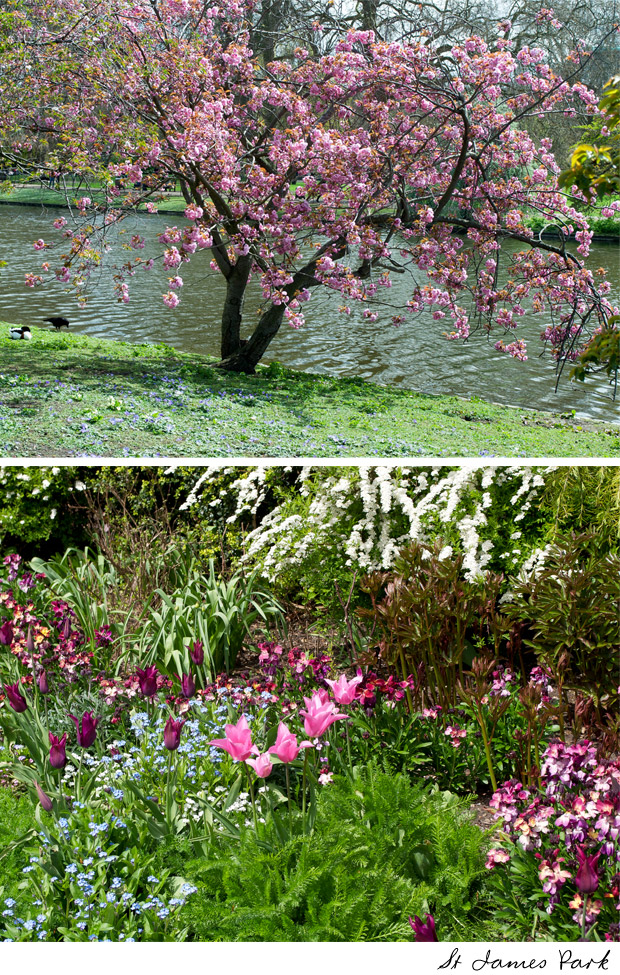 living-gazette-barbara-resende-viagem-primavera-flores-londres-st-james-park